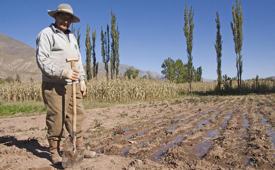 Nueva línea de crédito para Cooperativas Agropecuarias por $600 millones. MAGyP + Banco Nación